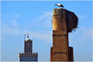 Picture of a stork nesting in a chimney, demonstrating why you may need a gas fireplace inspection at least once a year.
